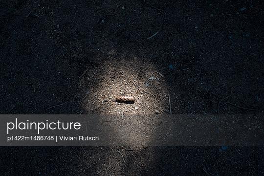 Tannenzapfen im Licht - p1422m1486748 von Vivian Rutsch
