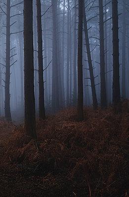 Misty woodland - p1256m2224741 by Sandra Jordan