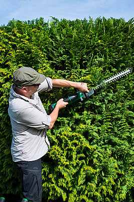 Cutting the hedges - p427m2027718 by R. Mohr