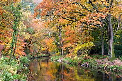 Autumn foliage along the banks of the River Teign at Fingle Bridge, Dartmoor National Park, Devon, England, United Kingdom, Europe - p871m1048046 by Adam Burton