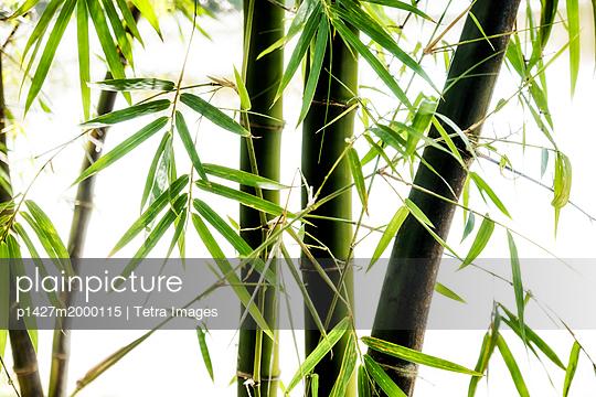 p1427m2000115 von Tetra Images