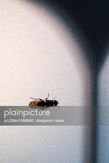 p1228m1588960 von Benjamin Harte