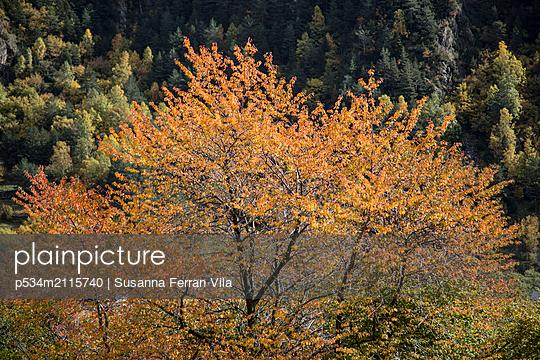 Autumn trees - p534m2115740 by Susanna Ferran Vila