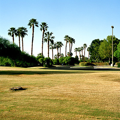 A lawn with various palm trees and other foliage, Palm Springs, California - p1094m900172 by Patrick Strattner