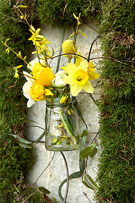 Yellow spring flowers in moss picture frame;  Isle of Wight;  UK - p349m920092 by Rachel Whiting