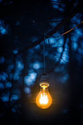 Light bulb on a branch - p829m2295583 by Régis Domergue