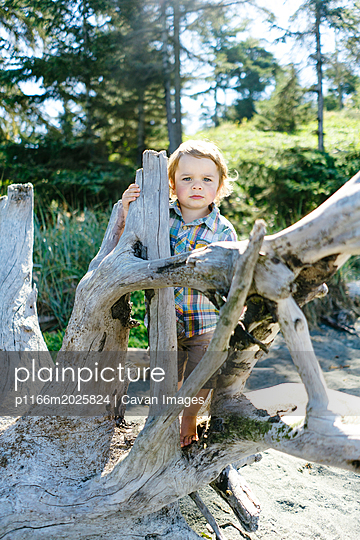 Portrait of cute baby boy standing by driftwood at beach against trees during sunny day - p1166m2025824 by Cavan Images
