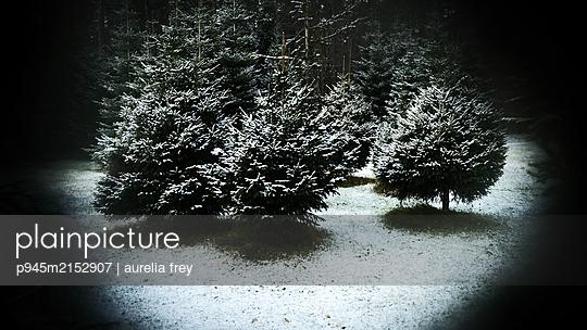 Trees in snow - p945m2152907 by aurelia frey