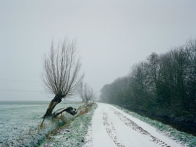 Trees in winter - p1132m1016971 by Mischa Keijser