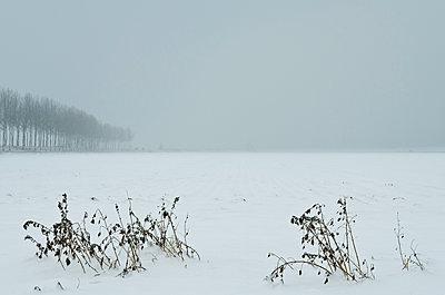 Snowy field - p1132m925489 by Mischa Keijser