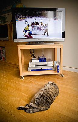 Cat watches hockey game on tv - p1418m1572077 by Jan Håkan Dahlström