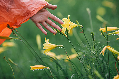 Cropped image of hand touching wet yellow flowers during rainy season - p301m1180672 by Vasily Pindyurin