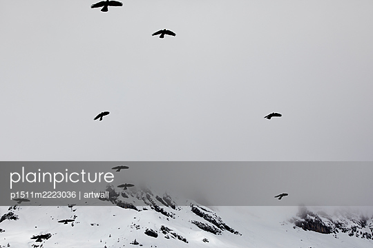 Flock of birds in the mountains - p1511m2223036 by artwall