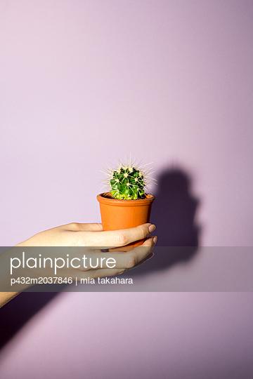 Frauenhand hält kleinen Kaktus - p432m2037846 von mia takahara