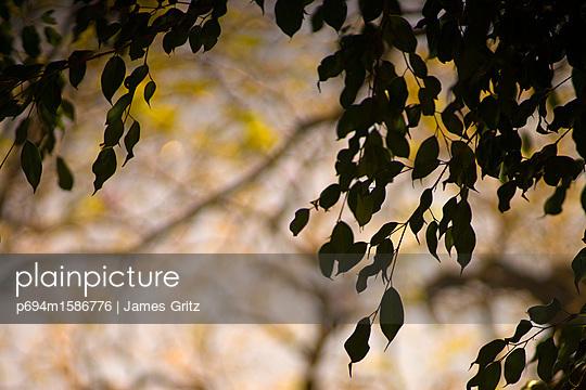 p694m1586776 von James Gritz