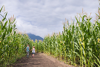Young boy and girl holding hands while in corn maze. - p1166m2212606 by Cavan Images