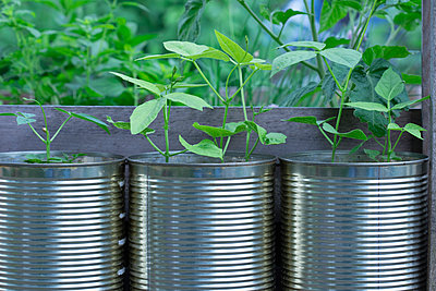 Close-up of seedlings growing in tin cans at garden - p609m1088705 by WRIGHT