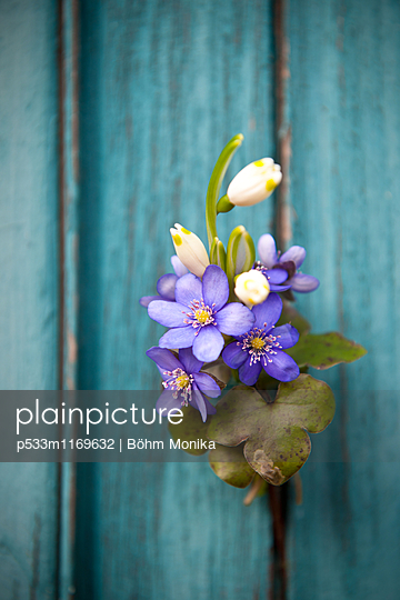 Frühlingsboten - p533m1169632 von Böhm Monika
