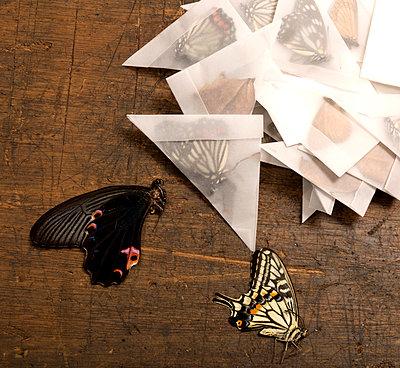 Schmetterlingessammlung - p451m919262 von Anja Weber-Decker