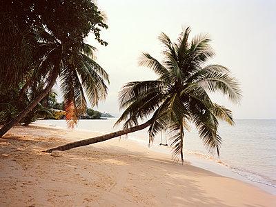 Palme am Strand - p751m1584796 von Dieter Schwer