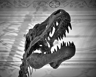 Albertosaurus Dinosaur Skull - p1072m993345 by Neville Mountford-Hoare