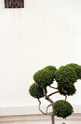 Einzelner Baum - p2120054 von Edith M. Balk