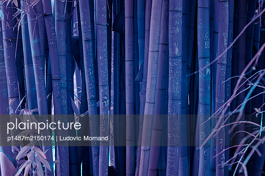 Blue bamboos  - p1487m2150174 by Ludovic Mornand