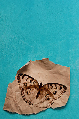 Butterfly on crumpled paper - p450m2211071 by Hanka Steidle