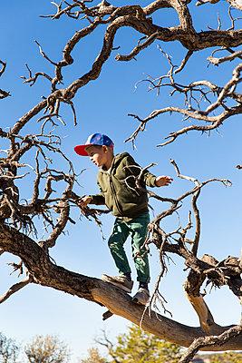 Boy on a tree - p756m2087326 by Bénédicte Lassalle