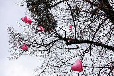 Hearts in a tree - p1078m2288660 by Frauke Thielking