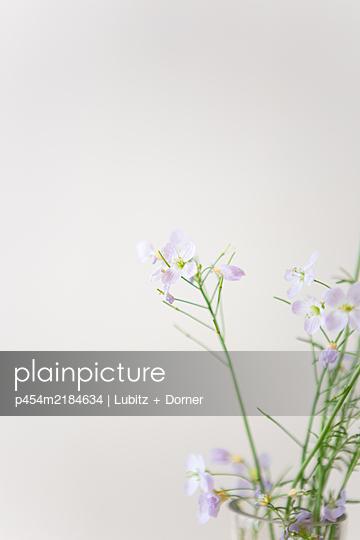 Cuckoo flower - p454m2184634 by Lubitz + Dorner