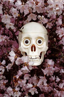 Totenschädel - p1210m1561992 von Ono Ludwig