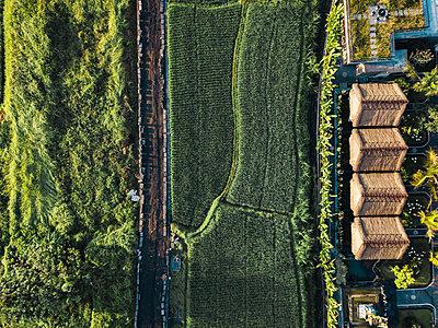 Indonesia, Bali, Ubud, Aerial view of rice fields - p300m2042660 von Konstantin Trubavin