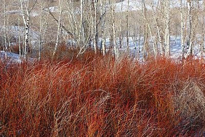 Dixie National Forest Utah - p7190047 by Rudi Sebastian