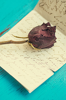 Dried rose on a letter  - p794m2021977 by Mohamad Itani
