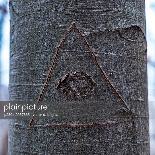 Eye of Providence, sign cut into the bark  - p280m2237865 by victor s. brigola