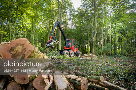 Tree harvesting machine cutting trees in sustainable forest - p924m2271163 by Monty Rakusen