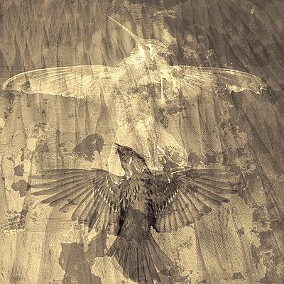 Birds - p1636m2216321 by Raina Anderson