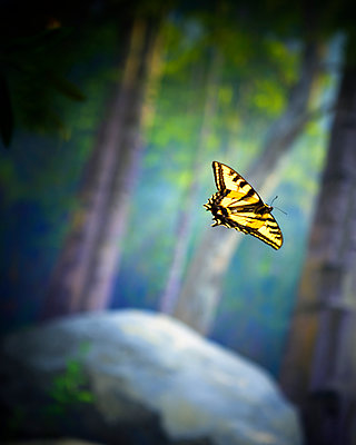 A Monarch butterfly in a diorama at a museum in Santa Barbara, California. - p343m1554642 by Ron Koeberer