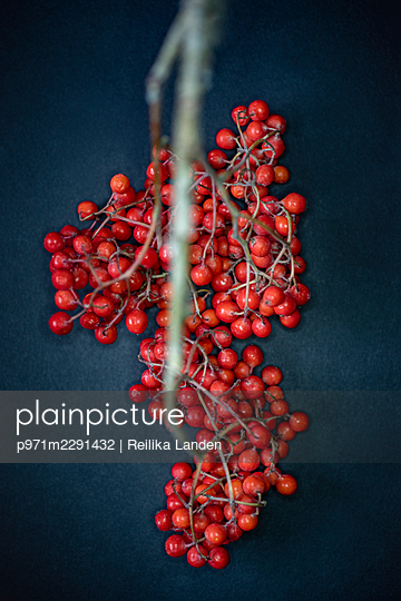 Rowanberry - p971m2291432 by Reilika Landen