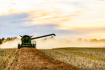 Harvesting a canola crop with a combine on a swathed crop at sunset; Legal, Alberta, Canada - p442m2111489 by LJM Photo