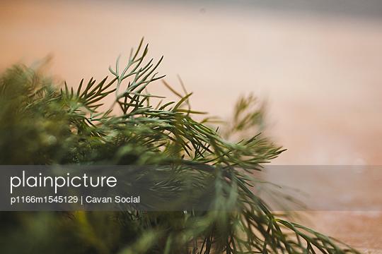 p1166m1545129 von Cavan Social