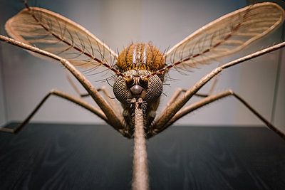 Dragonfly, exhibit, close-up - p1600m2215393 by Ole Spata