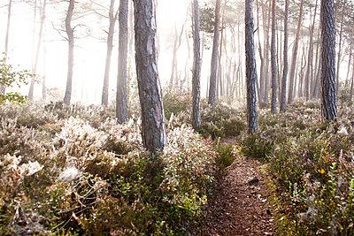 Morgennebel im Moorgebiet - p533m1088390 von Böhm Monika