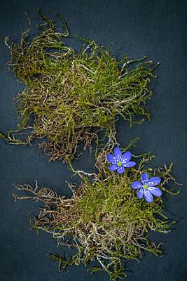 Moss and flowers - p971m2275788 by Reilika Landen