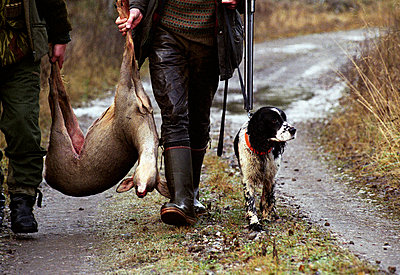 Two hunters walking on dirt road carrying dead roe deer with hunting dog - p8475077 by Per Klaesson