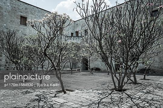 Bäume in einem Innenhof - p1170m1584930 von Bjanka Kadic