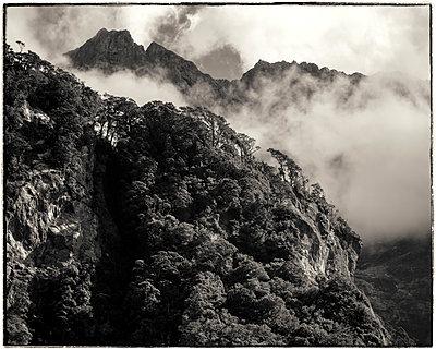Milford Sound Neuseeland - p1154m1425715 von Tom Hogan