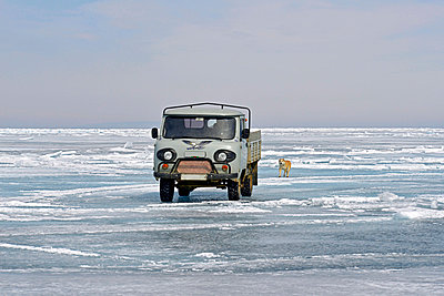 Russia, Lake Baikal, pickup truck and Siberian Husky on frozen lake - p300m1053149f by Gerald Nowak