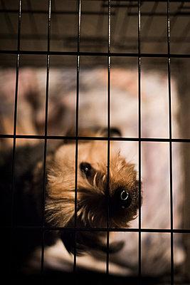 Animal shelter - p1076m987598 by TOBSN